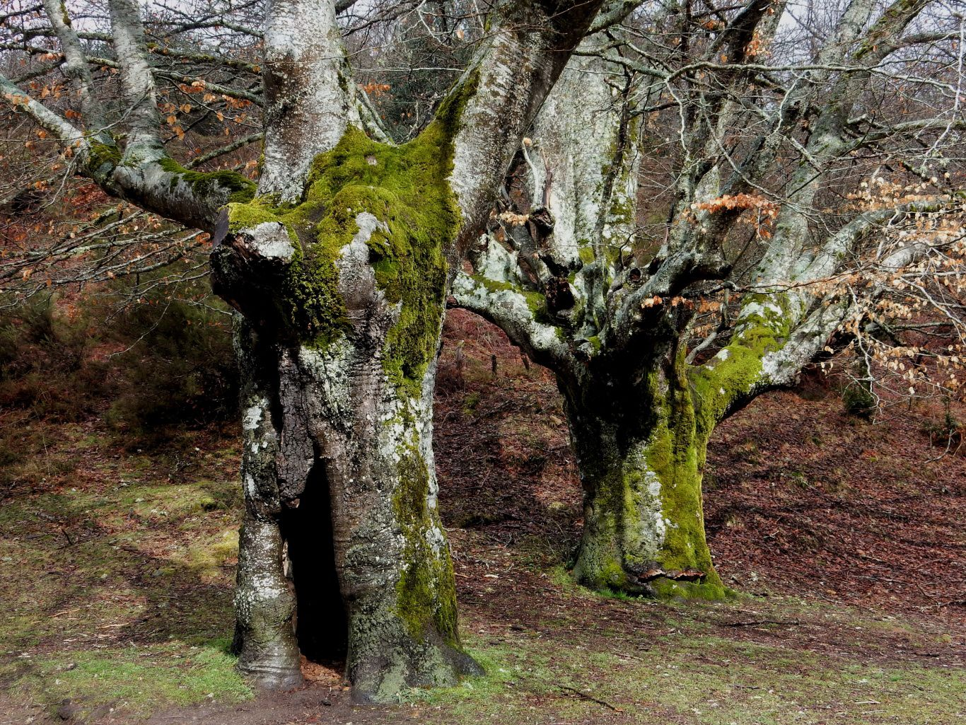 2020-1 local, Bosc encantat (Parc Gorbeia) País basc.jpg